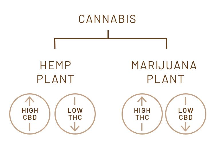 Canna-Curious diagram